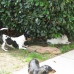 5/18/2011 Pup & Kitties (8)