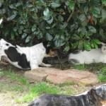 5/18/2011 Pup & Kitties (9)