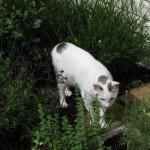 5/18/2011 Pup & Kitties (10)