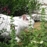 5/18/2011 Pup & Kitties (11)