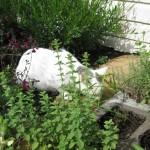 5/18/2011 Pup & Kitties (12)
