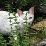 5/18/2011 Pup & Kitties (13)