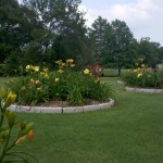 5/21/2011 Rose Gardens of Farmers Branch (35)