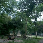5/21/2011 Rose Gardens of Farmers Branch (20)