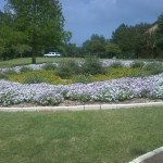 5/21/2011 Rose Gardens of Farmers Branch (5)