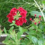 7/17/2011 Bloomin Things (2)