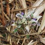 7/17/2011 Bloomin Things (5)