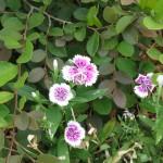 7/17/2011 Bloomin Things (6)