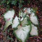 7/17/2011 Bloomin Things (11)