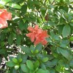 9/11/2011 Summer Blooms (1)