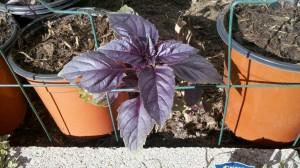 10/21/2011 October Herbs (1)