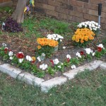 10/24/2011 Pansies and mums in the lily bed (1)