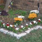 10/24/2011 Pansies and mums in the lily bed (2)
