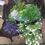 10/28/2011 Roses, Salvia, etc (8)