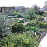 11/12/2011 Coppell Community Gardens (8)