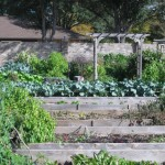 11/12/2011 Coppell Community Gardens (24)