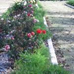 11/12/2011 AARS Test Garden (2)