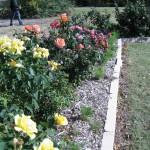 11/12/2011 AARS Test Garden (9)
