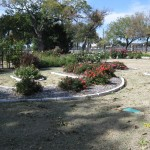 11/12/2011 AARS Test Garden (13)