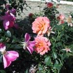 11/12/2011 AARS Test Garden (21)