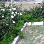 11/12/2011 AARS Test Garden (22)