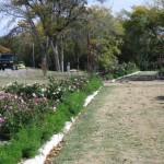11/12/2011 AARS Test Garden (23)