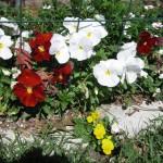 2/25/2012 February Bloomers (1)