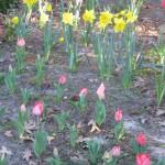 3/3/2012 Tyler Rose Gardens (5)