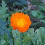 3/3/2012 Tyler Rose Gardens (12)