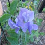 3/3/2012 Tyler Rose Gardens (19)