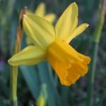 3/3/2012 Tyler Rose Gardens (25)