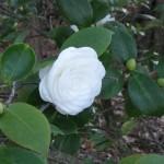 3/3/2012 Tyler Rose Gardens (27)