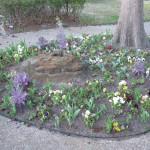 3/3/2012 Tyler Rose Gardens (28)