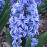 3/3/2012 Tyler Rose Gardens (31)