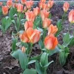 3/3/2012 Tyler Rose Gardens (37)