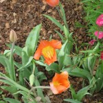 3/17/2012 March Arboretum (8)