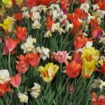3/17/2012 March Arboretum (102)