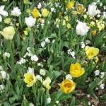 3/17/2012 March Arboretum (107)