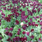 3/17/2012 March Arboretum (110)