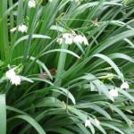 3/17/2012 March Arboretum (112)