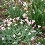 3/17/2012 March Arboretum (113)