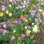 3/17/2012 March Arboretum (119)