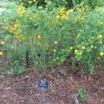 3/17/2012 March Arboretum (125)