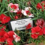 3/17/2012 March Arboretum (140)