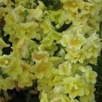 3/17/2012 March Arboretum (141)