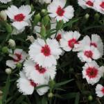 3/17/2012 March Arboretum (143)