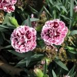 3/17/2012 March Arboretum (148)