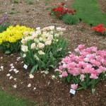 3/17/2012 March Arboretum (15)