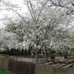 3/17/2012 March Arboretum (152)