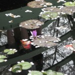 3/17/2012 March Arboretum (156)